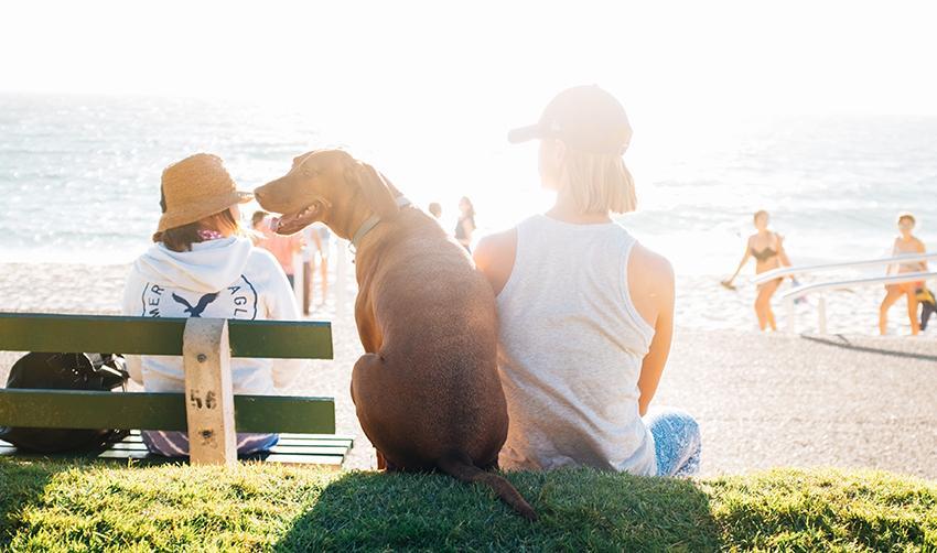 Pets & Mental Health